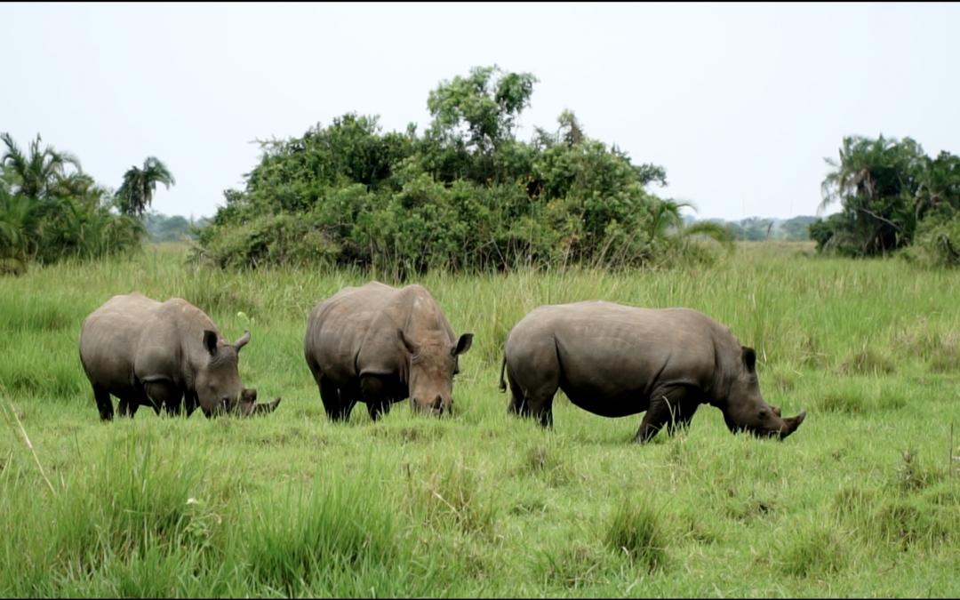 Safaritur i Uganda med Try Medics